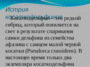 Истрия косаткодельфинов Косаткодельфин – это редкий гибрид, который появляетс