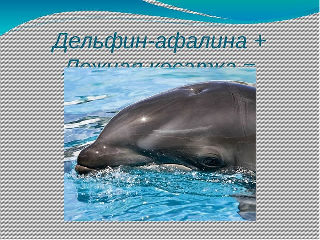 Дельфин-афалина + Ложная косатка = косаткодельфин