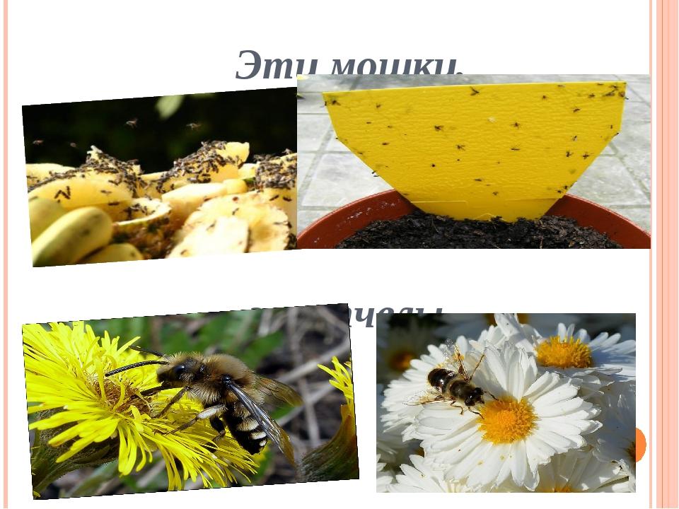 Эти мошки, эти пчелы,