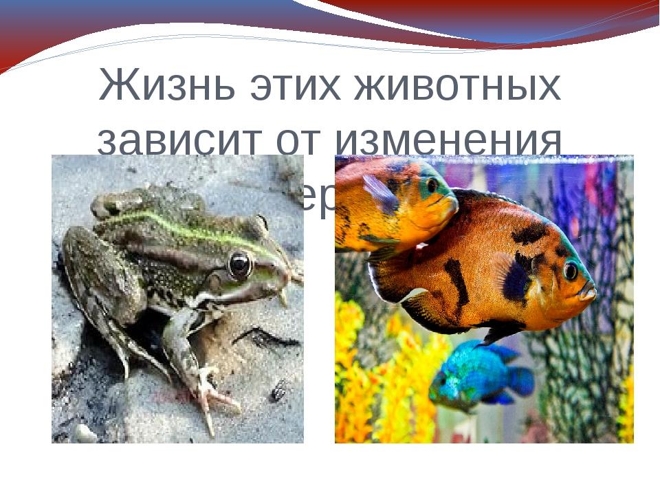 Жизнь этих животных зависит от изменения температуры