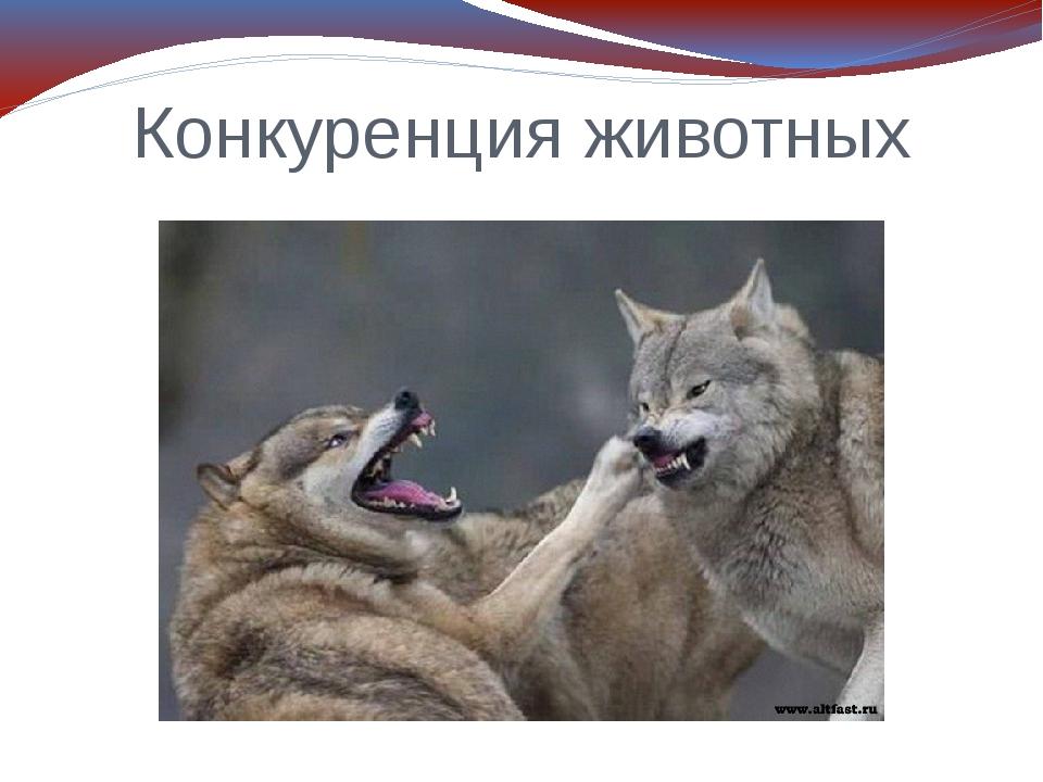 Конкуренция животных