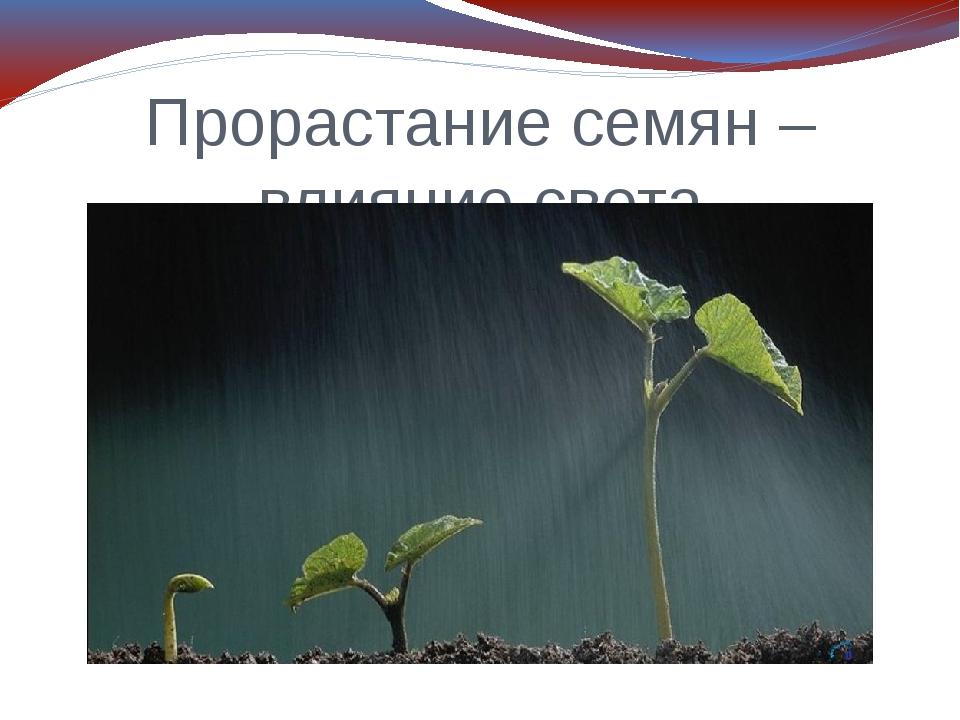Прорастание семян – влияние света