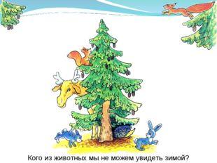 Кого из животных мы не можем увидеть зимой?