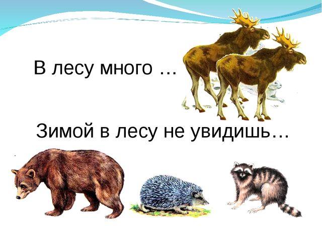 В лесу много … Зимой в лесу не увидишь…