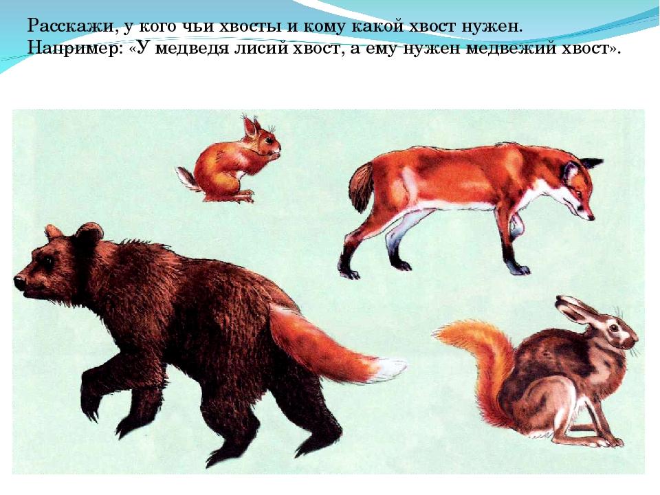Расскажи, у кого чьи хвосты и кому какой хвост нужен. Например: «У медведя ли...