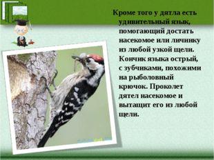 Кроме того у дятла есть удивительный язык, помогающий достать насекомое или л