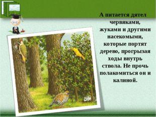 А питается дятел червяками, жуками и другими насекомыми, которые портят дерев