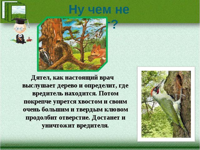 Ну чем не хирург? Дятел, как настоящий врач выслушает дерево и определит, где...
