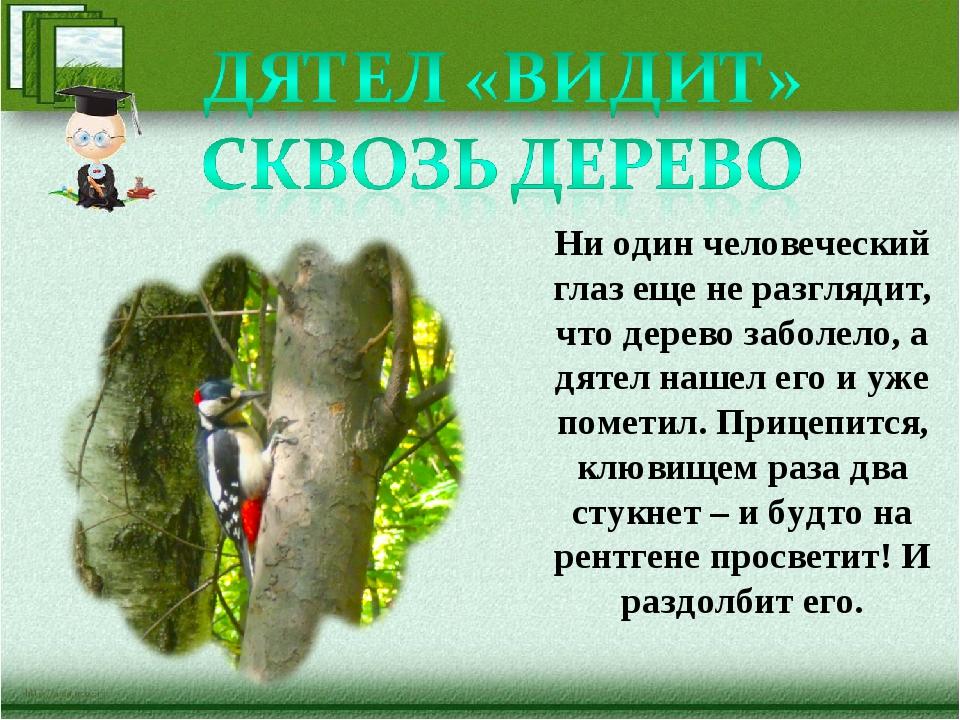 Ни один человеческий глаз еще не разглядит, что дерево заболело, а дятел наше...