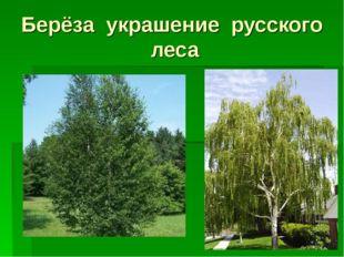 Берёза украшение русского леса