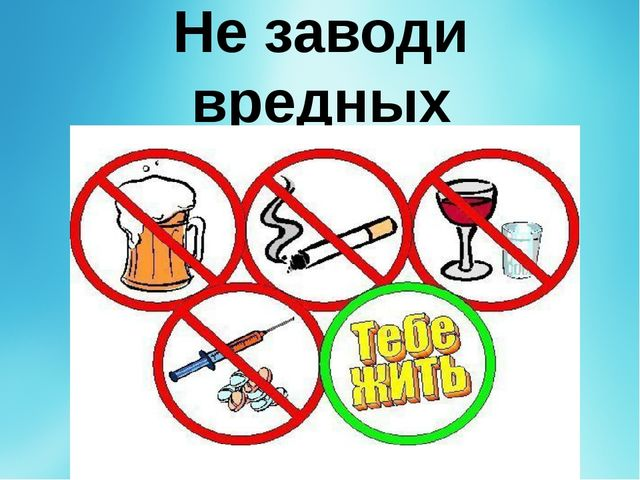 Не заводи вредных привычек