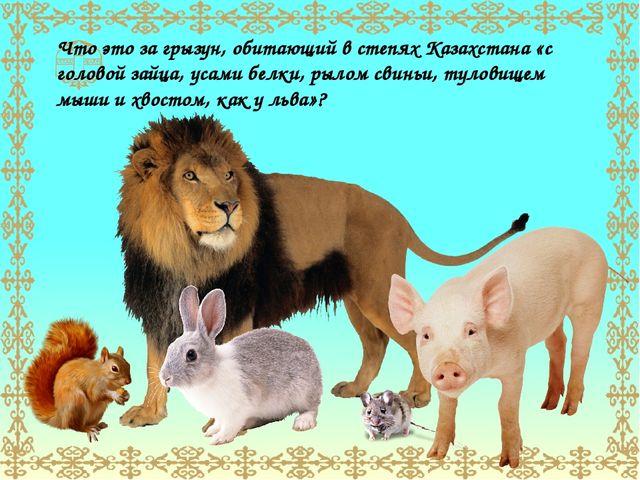 Что это за грызун, обитающий в степях Казахстана «с головой зайца, усами белк...