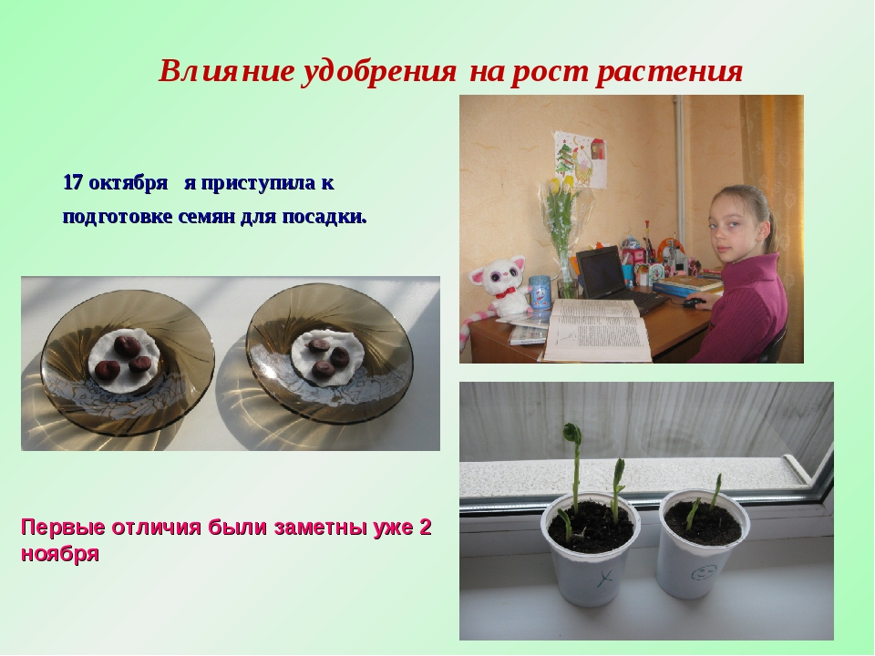 Влияние удобрения на рост растения 17 октября я приступила к подготовке семян...