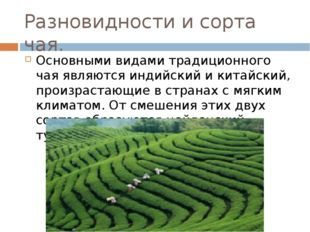 Разновидности и сорта чая. Основными видами традиционного чая являются индийс