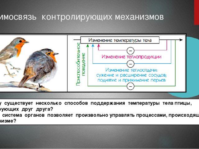 Взаимосвязь контролирующих механизмов Почему существует несколько способов по...