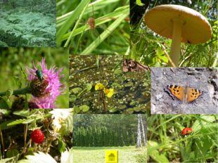 В объективе натуралиста