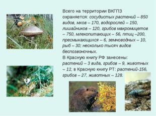 Всего на территории ВКГПЗ охраняется: сосудистых растений – 850 видов, мхов –