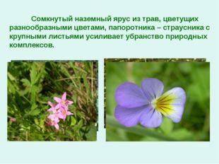 Сомкнутый наземный ярус из трав, цветущих разнообразными цветами, папоротник