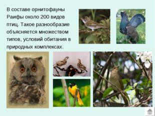 В составе орнитофауны Раифы около 200 видов птиц. Такое разнообразие объясняе