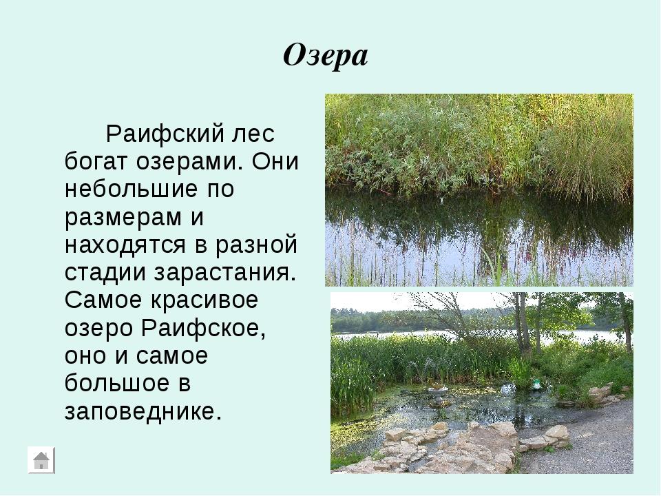 Озера Раифский лес богат озерами. Они небольшие по размерам и находятся в р...