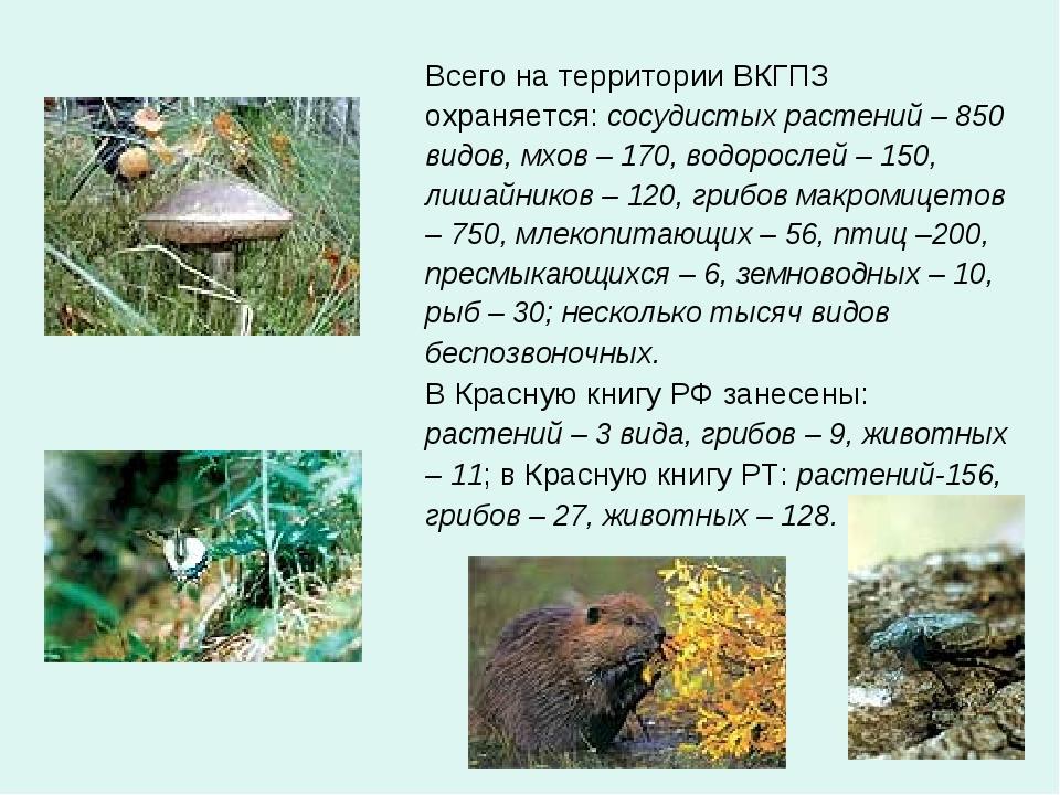 Всего на территории ВКГПЗ охраняется: сосудистых растений – 850 видов, мхов –...