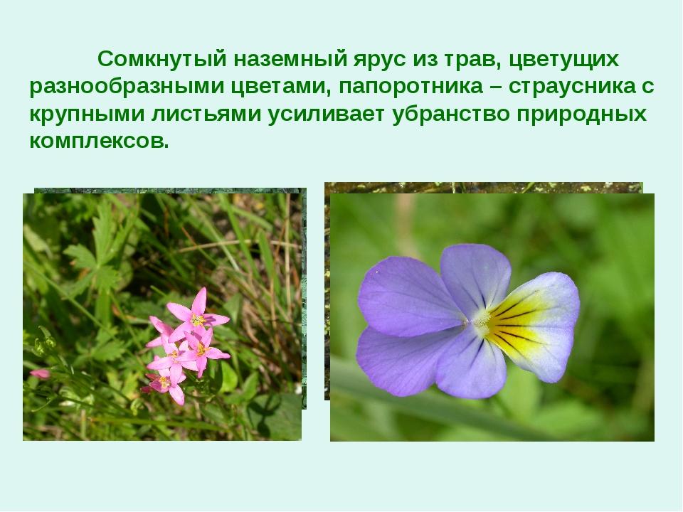 Сомкнутый наземный ярус из трав, цветущих разнообразными цветами, папоротник...