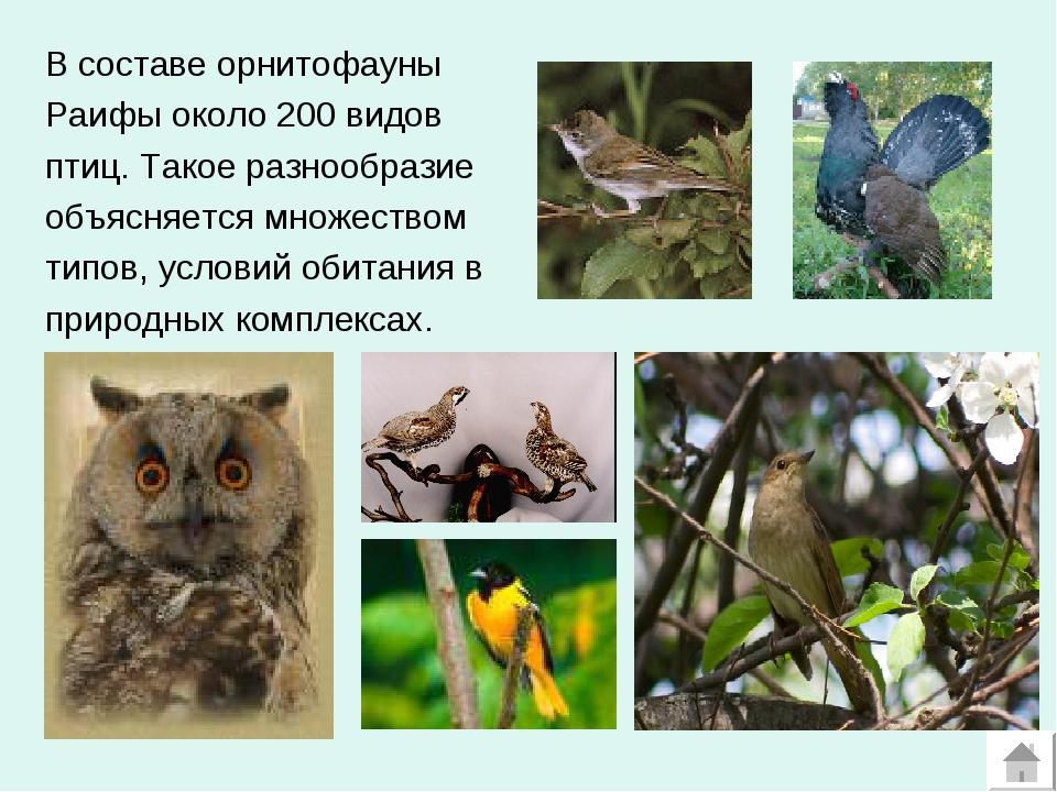 В составе орнитофауны Раифы около 200 видов птиц. Такое разнообразие объясняе...