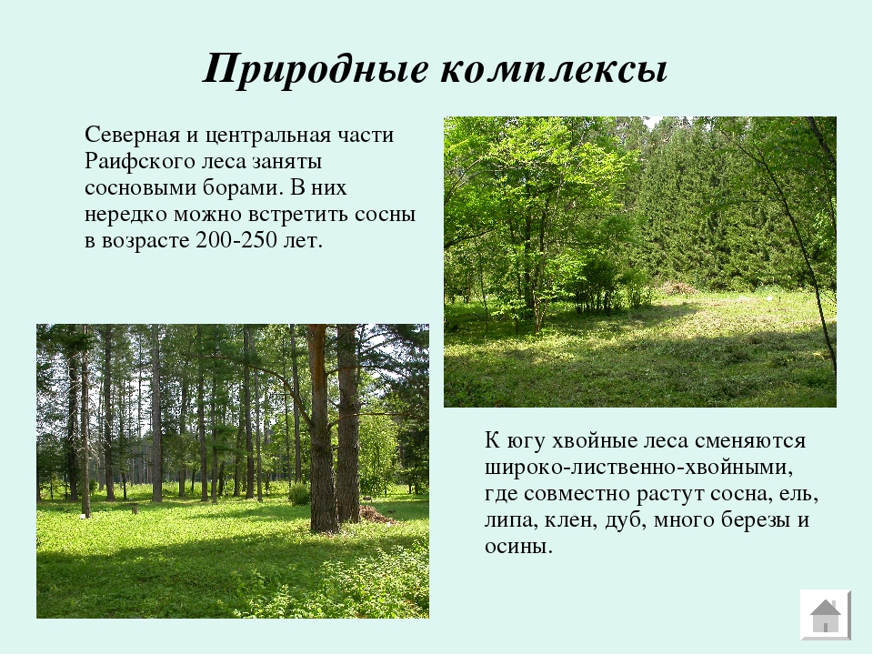 Природные комплексы Северная и центральная части Раифского леса заняты сосно...