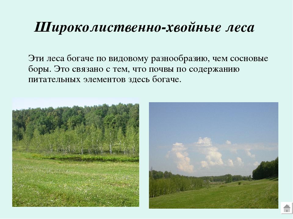 Широколиственно-хвойные леса Эти леса богаче по видовому разнообразию, чем с...