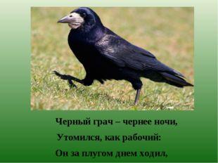 Черный грач – чернее ночи, Утомился, как рабочий: Он за плугом днем ходил, К