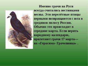 Именно грачи на Руси всегда считались вестниками весны. Эти перелётные птицы