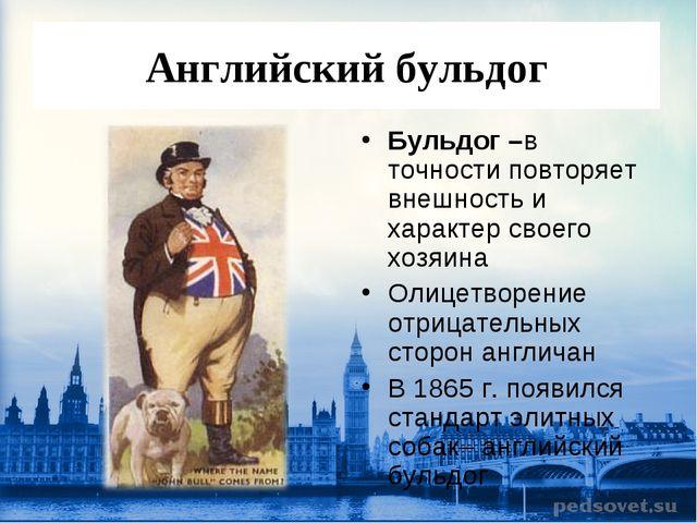 Английский бульдог Бульдог –в точности повторяет внешность и характер своего...