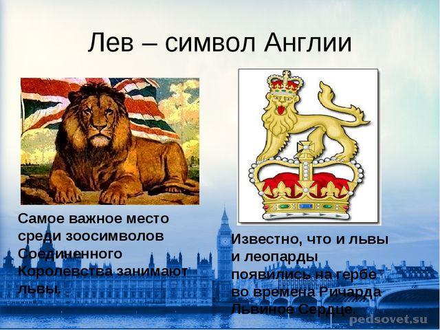 Лев – символ Англии Самое важное место среди зоосимволов Соединенного Королев...