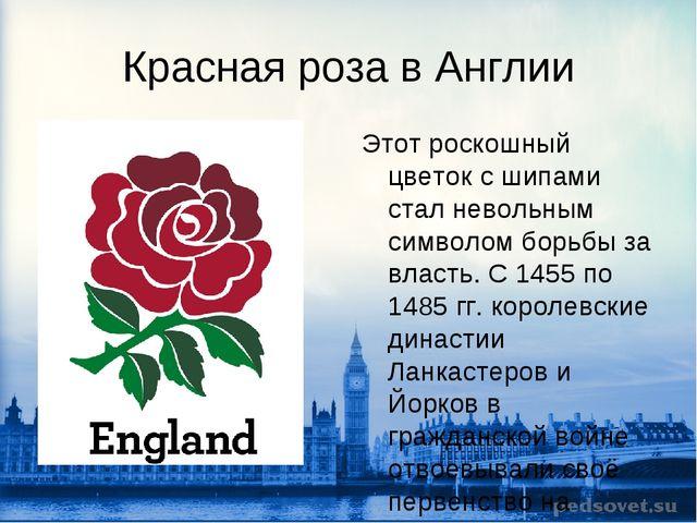 Красная роза в Англии Этот роскошный цветок с шипами стал невольным символом...