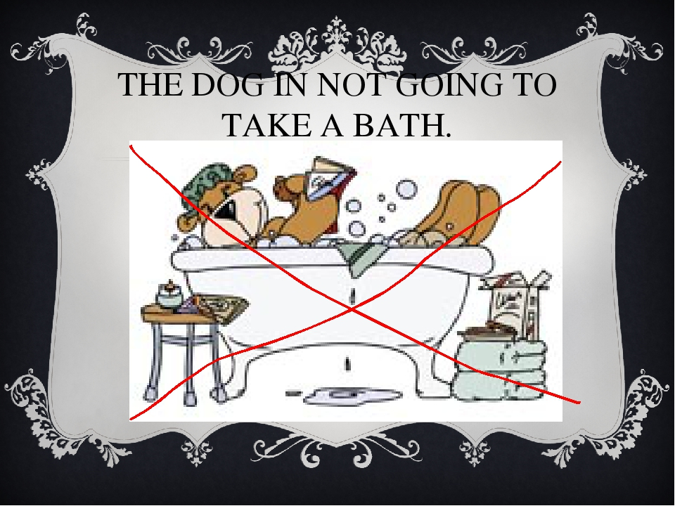 THE DOG IN NOT GOING TO TAKE A BATH.