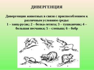 ДИВЕРГЕНЦИЯ Дивергенция животных в связи с приспособлением к различным услов