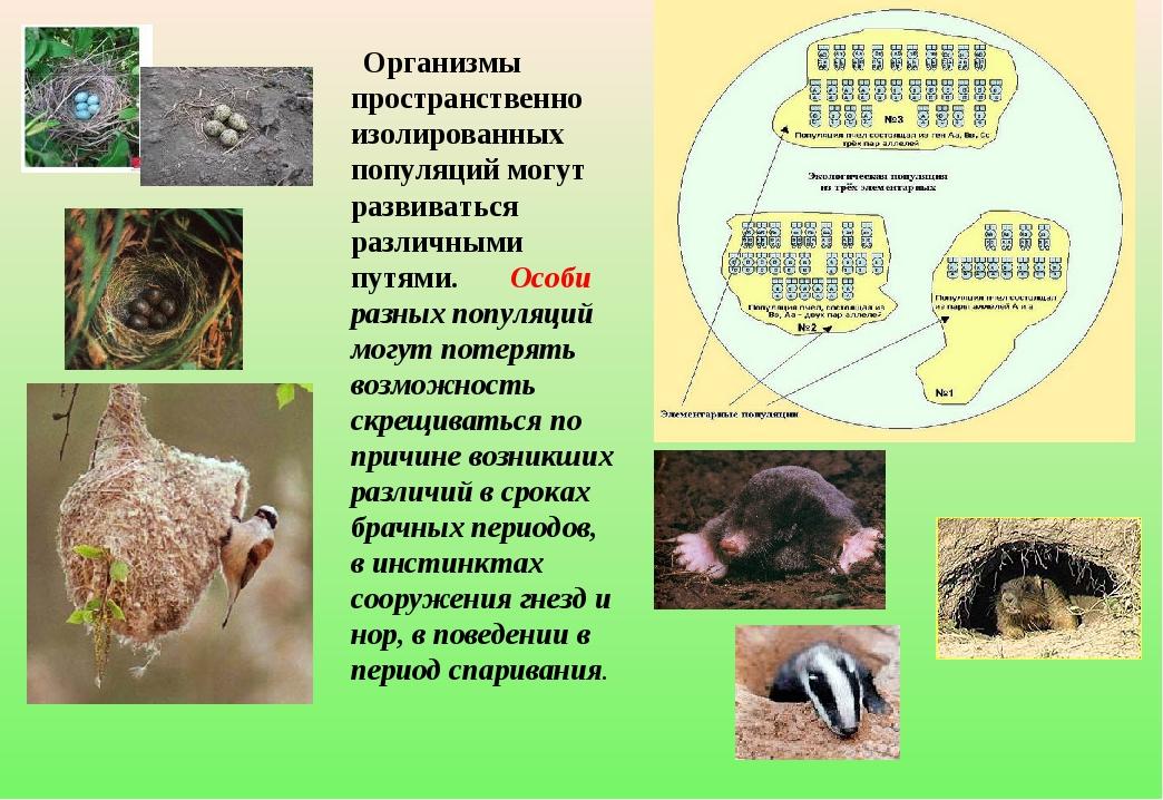 Организмы пространственно изолированных популяций могут развиваться различны...