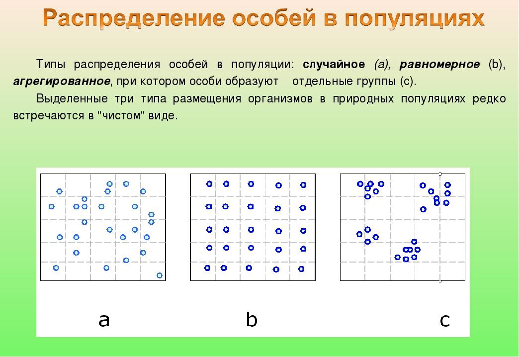 Типы распределения особей в популяции: случайное (а), равномерное (b), агрег...