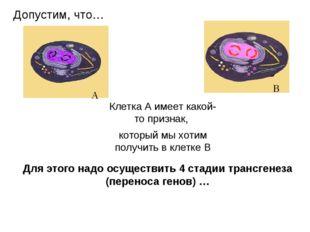Для этого надо осуществить 4 стадии трансгенеза (переноса генов) … Клетка А и