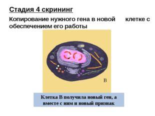 Клетка В получила новый ген, а вместе с ним и новый признак В Стадия 4 скрини