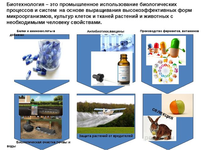 Производство ферментов, витаминов Антибиотики,вакцины Белки и аминокислоты в...