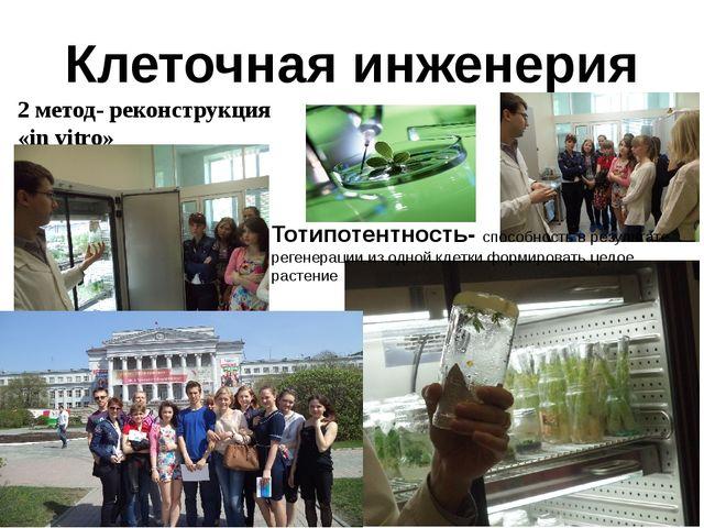 Клеточная инженерия 2 метод- реконструкция «in vitro» Тотипотентность- способ...