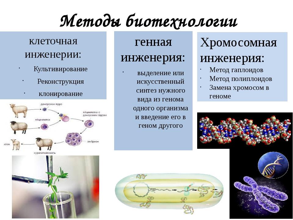 Методы биотехнологии клеточная инженерии: Культивирование Реконструкция клони...