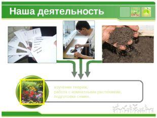 Наша деятельность изучение теории, работа с комнатными растениями, подготовка