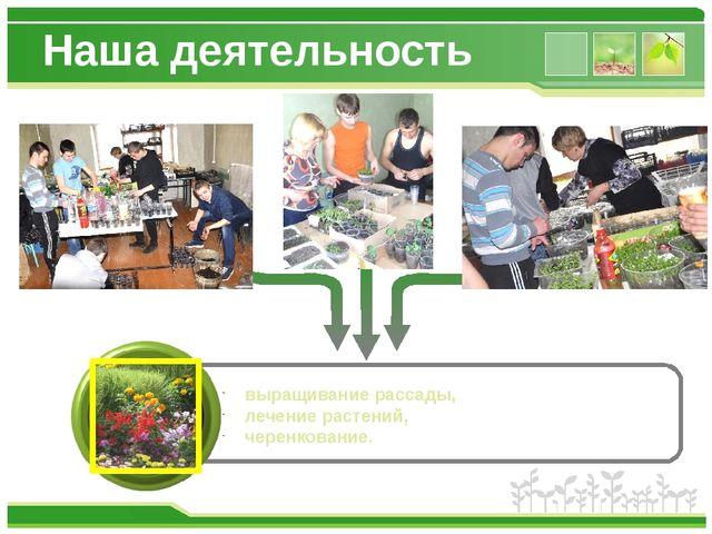 Наша деятельность выращивание рассады, лечение растений, черенкование. www.th...