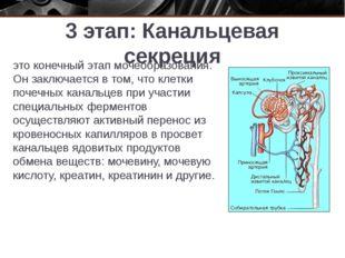 3 этап: Канальцевая секреция это конечный этап мочеобразования. Он заключаетс