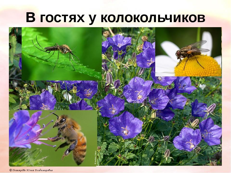 В гостях у колокольчиков © Дегтярёва Юлия Владимировна