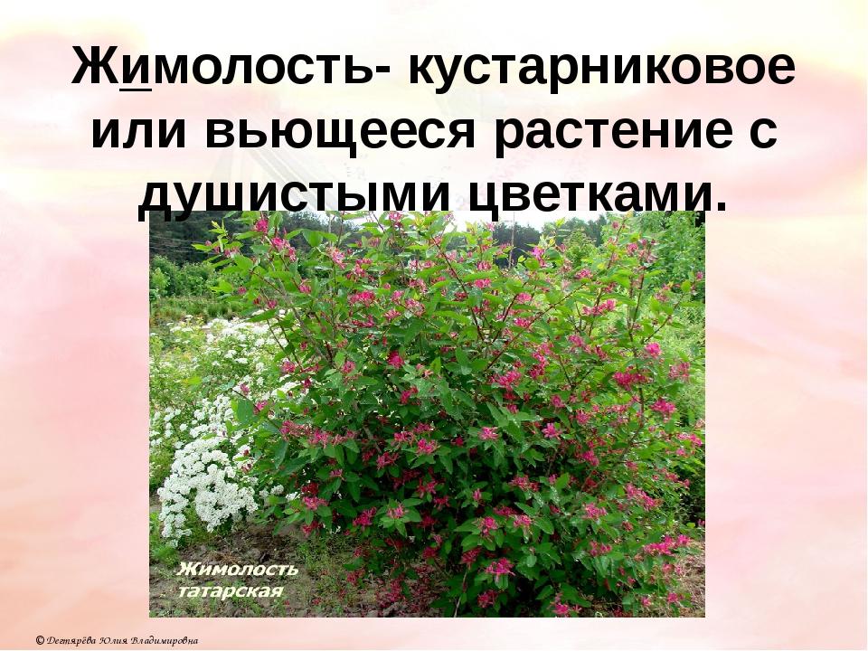 Жимолость- кустарниковое или вьющееся растение с душистыми цветками. © Дегтяр...