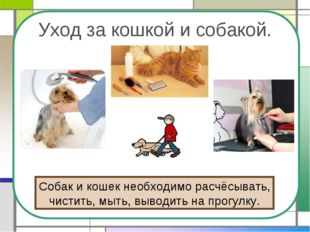 Уход за кошкой и собакой. Собак и кошек необходимо расчёсывать, чистить, мыть
