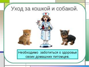 Уход за кошкой и собакой. Необходимо заботиться о здоровье своих домашних пит